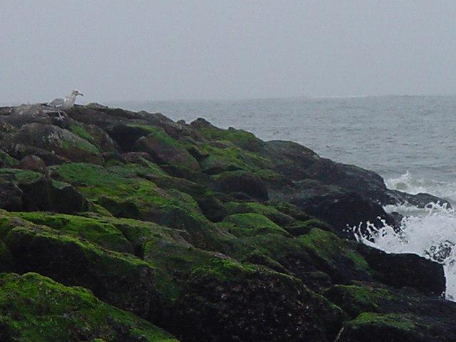 mossy_jetty_with_gull_and_wave_pt_lookout4122.jpg