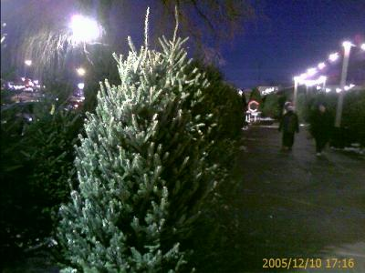 Christmas Tree Niagara Falls Blvd