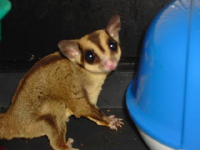 sugar gliders summit park mall written by paul on