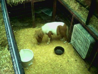"to see ""THE WORLD""S SMALLEST HORSE"" Yea I'm a ""mark"" as the carnies call"